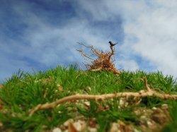 Photo1: Iroha[MS-019] Grass Bush Set