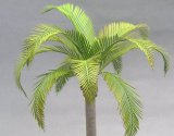 [Kamizukuri] [A-31] Coco nuts palm