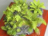 [Kamizukuri] [A-36] Jungle Plant