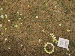 Photo1: Iroha[MS-014] Realgrass