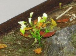 Photo1: Iroha[MS-011] Small Polyester White Flower Set