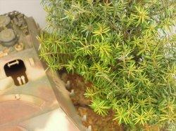 Photo4: Iroha[MS-018] Coniferous Leaf Set(2)