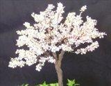 [Kamizukuri] [A-27] Cherry Blossoms