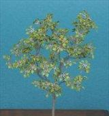 [Kamizukuri] [A-8-35] Lime Tree (1/35 scale)