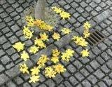 [Kamizukuri] [B-1] Fallen Leaves Maple