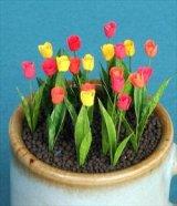 [Kamizukuri] [G-3] Tulip