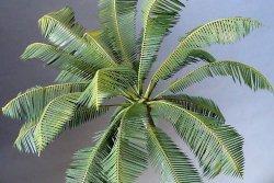 Photo2: [Kamizukuri] [A-38] Coco nuts palmII